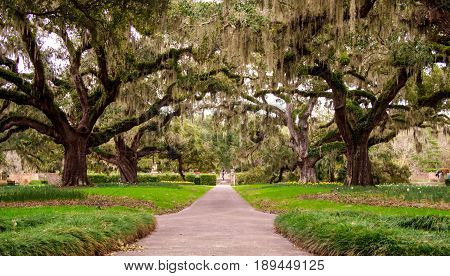 Myrtle Beach, South Carolina, USA - February 23, 2014: The famous Avenue of Oaks in Brookgreen Gardens features live oaks native to the South Carolina low country.