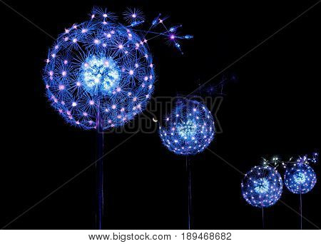 SYDNEY AUSTRALIA - MAY 31 2017; Spreading Life an exhibit at Vivid Sydney by artist COLORLEDS: Claudio Porras (Colombia) invites peiople to blow on two sensors that interact with the dandelions as they ight up and spread their seeds.