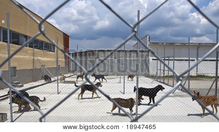 homeless dogs behind fence outside, in a shelter poster