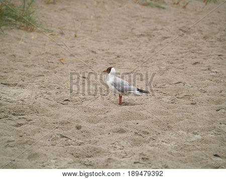 Seagulls on the beach Waterfowl animal sea beach sand summer fauna sun water