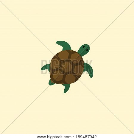 Flat Turtle Element. Vector Illustration Of Flat Tortoise Isolated On Clean Background. Can Be Used As Tortoise, Turtle And Animal Symbols.