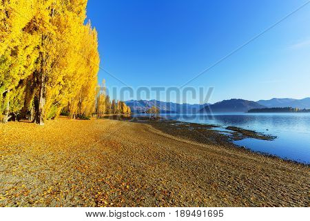 View of Lake Wanaka and The famous lone tree of lake Wanaka in Autumn , located at the foothills of Mount Aspiring National Park,  a World Heritage Site , Wanaka , South Island of New Zealand