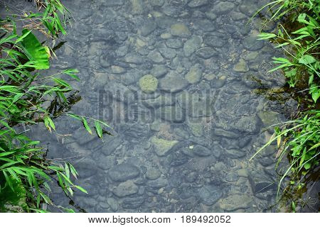 River stream with rocky in clear water and green trees on stream side.