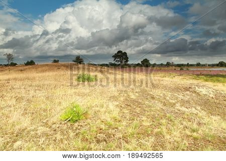 stormy sky over dry meadow in summer