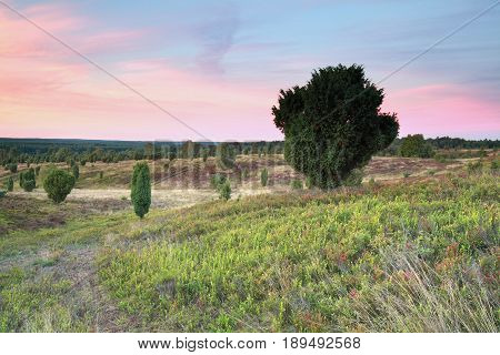 sunset over hills with junipers in summer