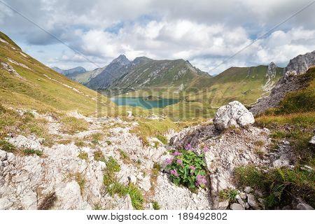 wildflowers on rocks by alpine lake Germany
