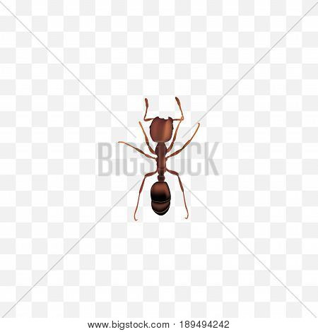 Realistic Ant Element. Vector Illustration Of Realistic Emmet Isolated On Clean Background. Can Be Used As Emmet, Ant And Pismire Symbols.