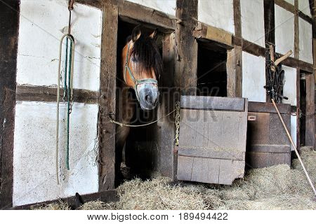 An image of a sleeping horse in a vintage stable