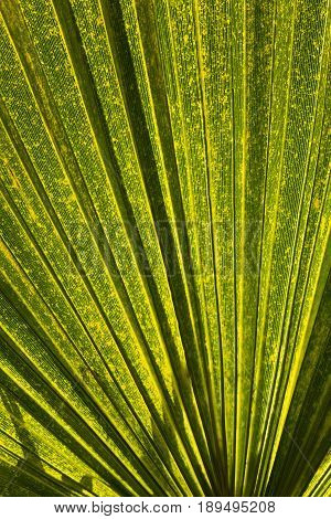 underside of a tropical fern in bright sunlight