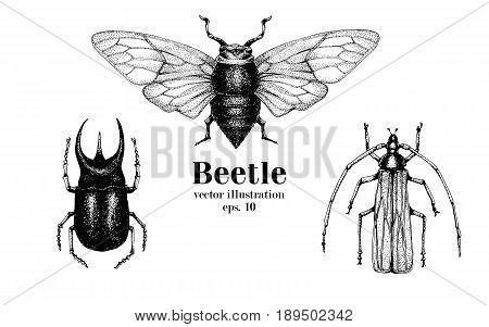 Vector retro hand drawn beetle set. Bug, dor, dorr, insect on a white background. Retro illustration