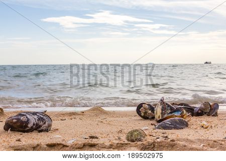 many Mussels shell on the beach use for background