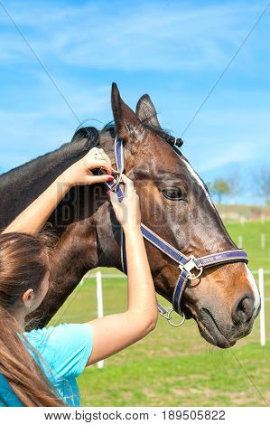Women owner harnessing the stallion. Multicolored summertime outdoors image.