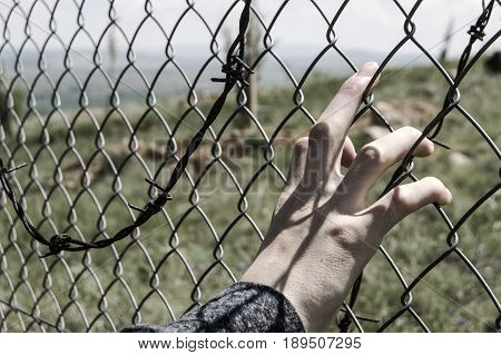 Freedom, being a captive among the wire braids, not being free, living among the barbed wire braids.