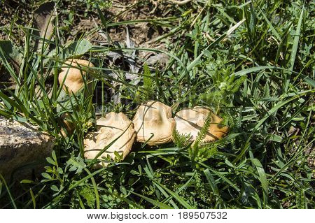 Types of poisonous mushrooms, photos of poisonous mushrooms