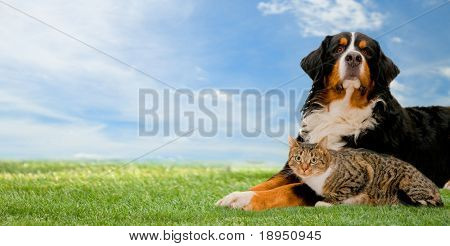 Dog and cat together on grass, sunny spring day and blue sky. Panorama poster