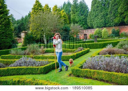 gardener woman stands amidst a maze of hedgerows in an English garden leaning on a rake. Behind her stands her little dog