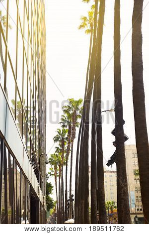 Alley of palm trees on Hollywood Boulevard in Los Angeles