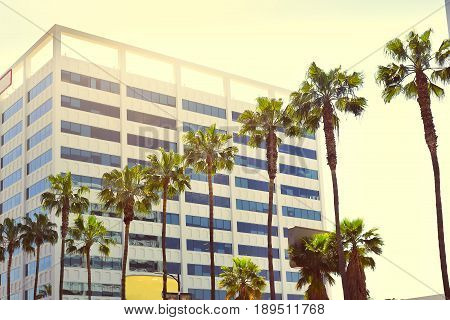 Palms in a row against the background of a multi-storey building in the sunlight on Hollywood Boulevard; Vintage effect