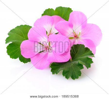 Three beautiful white and pink flowers isolated on white.