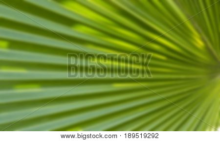 abstract out of focus palm leaf with diagonal lines and green leaves