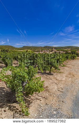 View at vineyards at Languedoc-Roussillon province in France