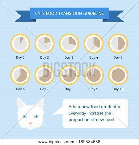 Cats food transition guideline. Infographics about feeding animals
