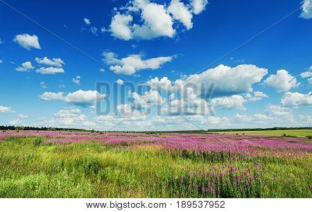 Beautiful Summer Landscape