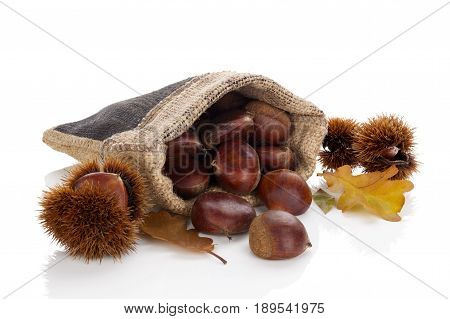 Chestnuts in burlap bag with leafs isolated on white background.
