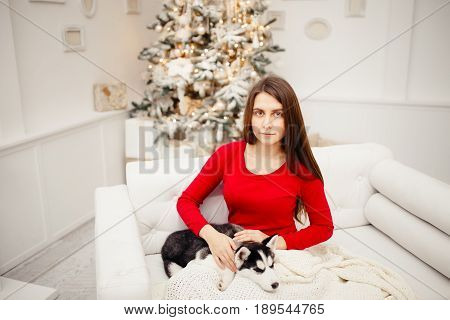Siberian Husky puppy sleeps on the knees of the european young girl in red dress. Girl sits on the white leather sofa against the backdrop of New Year's tree and gifts. Conception is New Year's Eve