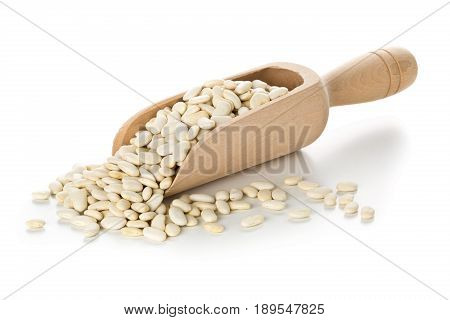 Dried white bean legumes in wooden scoop over white background