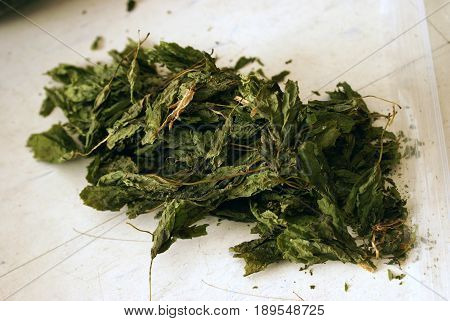 Closeup of a small pile of dried maple leaves for further use in lab extractions and studies.