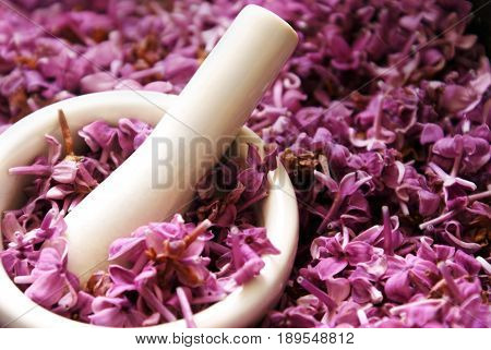 Heaps of Lilac flower petals being processed for herbal substrates and extractions.