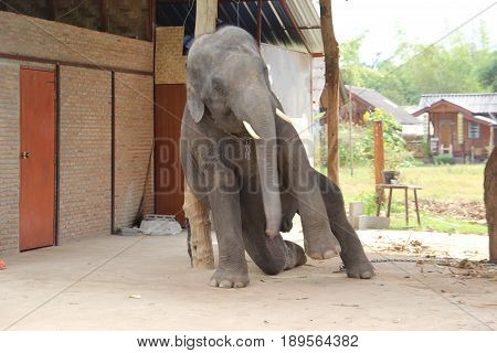 The Big Elephant Surprises People With Its Playfulness And Artistry
