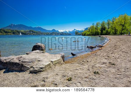 Sandy beach in Lucerne with Lucerne lake Pilatus mountain and Swiss Alps Switzerland Europe