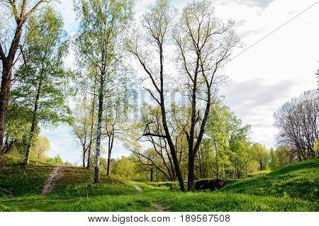 Summer landscape Park on a Sunny day. A view of the trees and the lawned hilly terrain.