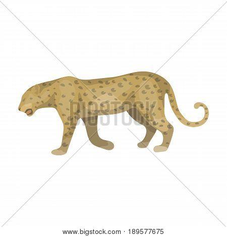 Leopard.African safari single icon in cartoon style vector symbol stock illustration .