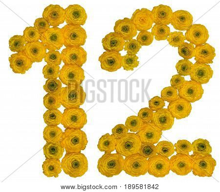 Arabic Numeral 12, Twelve,  From Yellow Flowers Of Buttercup, Isolated On White Background