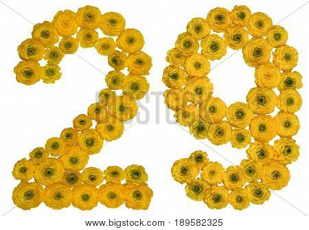 Arabic Numeral 29, Twenty Nine, From Yellow Flowers Of Buttercup, Isolated On White Background