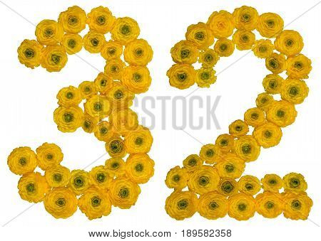 Arabic Numeral 32, Thirty Two, From Yellow Flowers Of Buttercup, Isolated On White Background