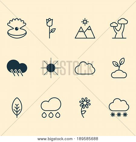 Harmony Icons Set. Collection Of Seashell, Rain, Oak And Other Elements. Also Includes Symbols Such As Pearl, Sunlight, Cloudburst.