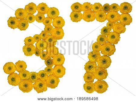 Arabic Numeral 37, Thirty Seven, From Yellow Flowers Of Buttercup, Isolated On White Background