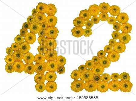 Arabic Numeral 42, Forty Two, From Yellow Flowers Of Buttercup, Isolated On White Background