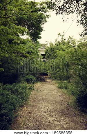 A path to the old cottage in the summer green forest. Retro style photo
