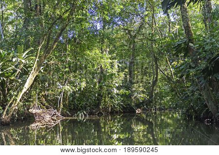 Tropical Rain forest Lagoon in Tortuguero National Park in Costa Rica