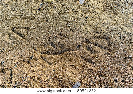Animal tracks in the sand of Juniper Beach Provincial Park on the Thompson River between Kamloops and Cache Creek in central British Columbia