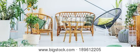 Furniture made of rattan wood in cozy living room with plants