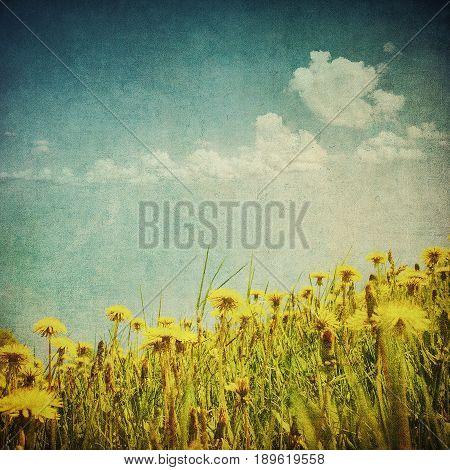 vintage image of dandelion field and blue sky
