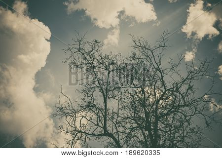 Sky Above The Trees In The Forest In Vintage Tone.