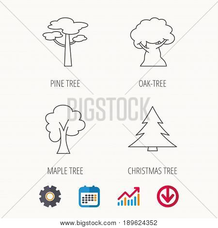Pine tree, maple and oak-tree icons. Forest trees linear signs. Calendar, Graph chart and Cogwheel signs. Download colored web icon. Vector