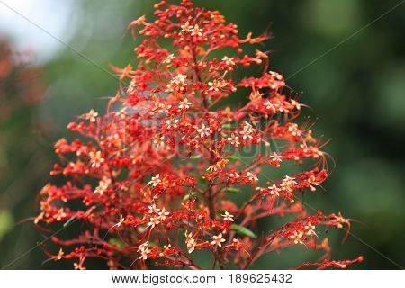 Bright colorful multicolored flowers Singapore Southeast Asia